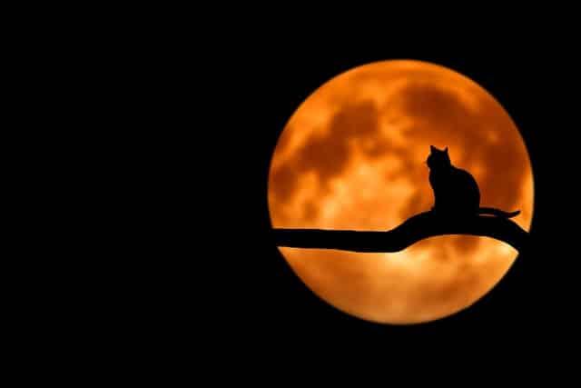 Cómo atraer el amor en otoño ritual de la luna llena
